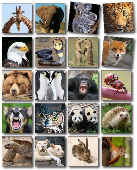 AnimalSemiotics